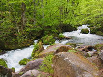 Oirase gorge in fresh green, Aomori, Japan Royalty Free Stock Photography