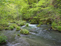 Oirase gorge in fresh green, Aomori, Japan Stock Image