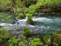 Oirase gorge in fresh green, Aomori, Japan Royalty Free Stock Photo