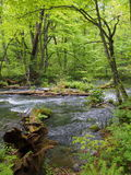 Oirase gorge in fresh green, Aomori, Japan Stock Photos