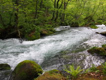 Oirase gorge in fresh green, Aomori, Japan Royalty Free Stock Images