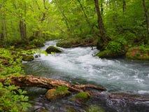 Oirase gorge in fresh green, Aomori, Japan Royalty Free Stock Photos