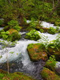 Oirase gorge in fresh green, Aomori, Japan Royalty Free Stock Photo