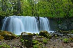 Oirase gorge in fresh green, Aomori, Japan Stock Images