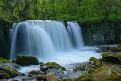 Oirase gorge in fresh green, Aomori, Japan Royalty Free Stock Images