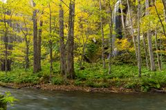 Oirase Gorge Stream in Autumn royalty free stock photos