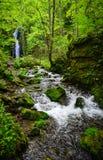 Oirase klyfta i Aomori, nordliga Japan Fotografering för Bildbyråer