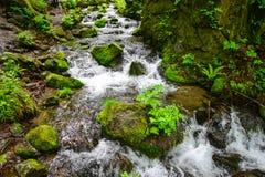 Oirase klyfta i Aomori, nordliga Japan Royaltyfria Foton