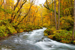 Oirase River. During the fall in Japan Royalty Free Stock Images