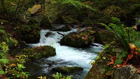 Oirase River flow passing rocks covered with green moss and colorful falling leaves of autumn