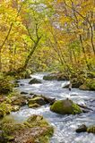 Oirase River Stream Stock Images