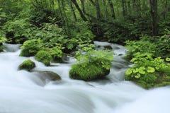 Oirase stream Stock Image