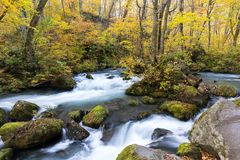 Oirase Stream in autumn royalty free stock images