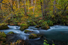 Oirase stream in autumn season. Stock Image