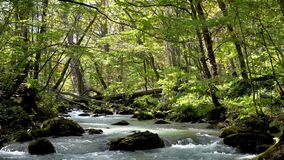 Oirase Stream in autumn sunny day