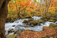 Oirase Stream in autumn - Towada, Aomori, Japan stock photos