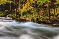 Oirase Stream in autumn at Towada Hachimantai National Park in Aomori, ,Tohoku, Japan. Colorful forest Stock Photography