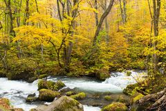 Oirase Stream in fall Royalty Free Stock Photography