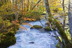 Oirase Stream River royalty free stock photography