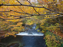 Oirase Streams, Aomori, Japan Stock Images