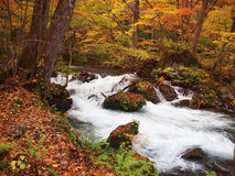 Oirase Streams, Aomori, Japan. Beautiful streams very popular to both Japanese & tourist, especially during autumn in Aomori, Japan Stock Photo