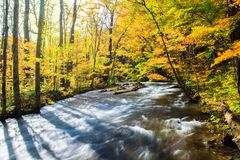 Oirase-Strom im Herbst an Nationalpark Towada Hachimantai in Aomori, Tohoku, Japan lizenzfreie stockbilder