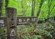 Oirase wąwóz w Aomori, północny Japonia Obraz Royalty Free