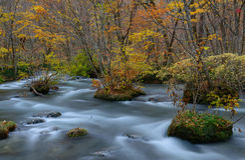 Oirasekloof in de Herfst, in Aomori, Japan Stock Foto