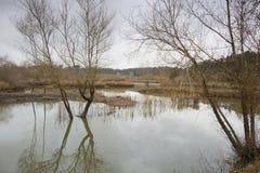 Ois da ribeira公园  免版税库存照片