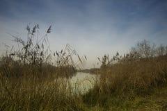 Ois da ribeira公园  免版税库存图片