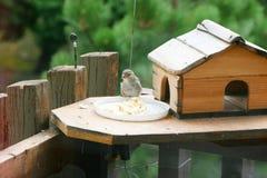 Oiseau à côté de sa maison Photographie stock