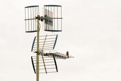 Oiseau à la télévision d'antenne Photos stock