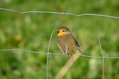 Oiseau à une barrière de câble image stock