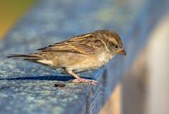 Oiseau été perché dans l'Algarve Images stock