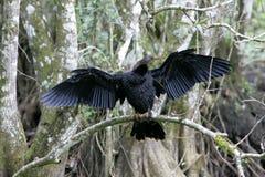 Oiseau été perché sur le bâton Photos stock