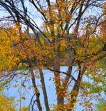 Oiseau été perché sur le courrier en Boise Cascade Lake photo stock