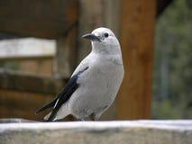 Oiseau Photo stock