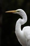 Oiseau Images libres de droits