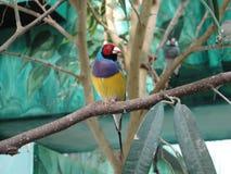 Oiseau Image stock