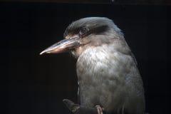 Oiseau Photos libres de droits