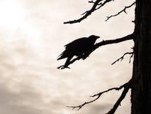 Oiseau accrochant sur l'arbre et le ciel Image stock