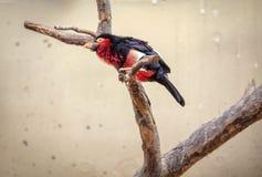 Oiseau africain exotique photos stock