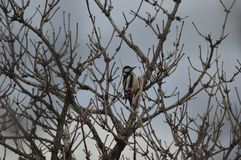 , oiseau, animaux, arbre, nature, région sauvage Photographie stock libre de droits