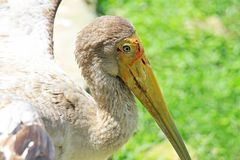 Oiseau, animaux de réservation Photo stock