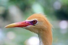 Oiseau, animaux de réservation Image stock