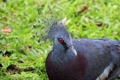 Oiseau, animaux de réservation Photos stock