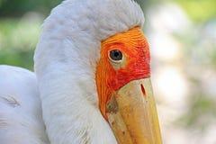 Oiseau, animaux de réservation Photographie stock libre de droits