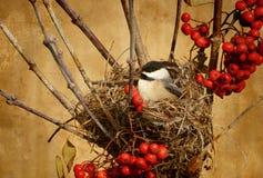 Oiseau Antiqued innest. photos stock