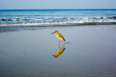 Oiseau appréciant des vagues de matin photos stock