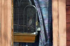 Oiseau apprivoisé derrière la fenêtre images libres de droits